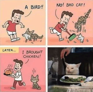 Reason behind cat's reaction: No! BAD CAT!  A BIRD!!  le  LATER...  I BROUGHT  CHICKEN!  an Reason behind cat's reaction