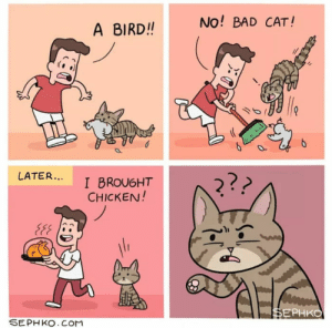 meirl by FairDinkemAussie FOLLOW 4 MORE MEMES.: No! BAD CAT!  A BIRD!!  lfe  O  LATER...  I BROUGHT  CHICKEN!  2??  w  SEPHKO.CoM  БЕРНКО meirl by FairDinkemAussie FOLLOW 4 MORE MEMES.