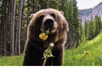 Head, Bear, and Flower: No Bear. You Are Supposed To Wear The Flower On Your HEAD not EAT it.