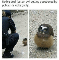 "Fifa, Ignorant, and Memes: No big deal, just an owl getting questioned by  police. He looks guilty. ""what's the matter officer?"" 🔸Leave a like and follow @ninjahmad for more 👍 🔸Help me reach 100 subs on my YouTube channel, link is in my bio! 🔸👉YouTube:NinjAhmad 👈 🔸👉Personal:@notninjahmad 🔸Add me on steam! 👇 🔸Steam-ID: NinjAhmad 🔸Tell your buddies about this horrible page✊ 💊Tags💊(IGNORE): picoftheday fallout funny meme instagood photooftheday like4like gta cod pc xbox xbox360 xboxone xbox1 playstation ps3 ps4 assassinscreed fifa love skyrim callofduty bo2 bo3 blackops pc follow overwatch counterstrike csgo valve"