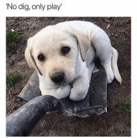 I actually wouldn't mind this kind of interruption at all | @cuteandfuzzybunch: 'No dig, only play' I actually wouldn't mind this kind of interruption at all | @cuteandfuzzybunch