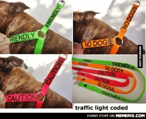 Such a good idea for dog loversomg-humor.tumblr.com: NO DOGS  FRIENDLY  FRIENDLY  NO DOGS  CAUTION  CAUTION  NO DOGS  FRIENDLY  NO DOGS  CAUTION  FRIENDLY  CAUTIONS  traffic light coded  FUNNY STUFF ON MEMEPIX.COM  FRIENDLY  CAUTION  NO DOGS  MEMEPIX.COM Such a good idea for dog loversomg-humor.tumblr.com