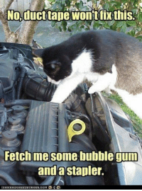 Animals, Funny, and Memes: No,ducttape wonit fix this  Fetch me some bubble gum  anda stapler. Next time your car breaks down, consider replcing your mechanic with your pet..they sure think they know what they're doing!#animals @ animal memes # funny memes # cat memes # dog memes # mechanic # car # broken car # fixing car