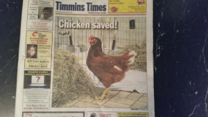 Money, News, and Phone: No Holds...  Instant CASH!  Timmi  Chicken saved  9  Income Tax Preparation  E-Filing Bookkeeping  Payroll & Contract Services  TIMMINS MONEY MART  950 Riverside Drive  705-264-6364  one  20 years in  ar  Open 7 Days A Week  business  www.timminstimes.com  Thursday, November 30, 2017  Cedar Street  Astrid Schmidt  Phone: 705-264-1005  FAX: 705 266-9205  e-mail: astridbook@outlook.conm  www.astridbookkeeping.ca  Page 9  It  Mortgage  WE WORK FOR YOU,  NOT THE LENDERS  CALL ME TODAY  Sheryl Levesque  Cell: 705-288-1017  Timmins Financial  209 Third Avenue  in the Timmins Financial Bldg  705-531-3232  Struggling to build a  website for your business?  Your website is a digital representation of your  company Without an online presence, your  customers can't find you while searching online  A respansive website is the best way to help  customers learn about your business,  regardless of device they are using  The Daily Press can help  Let us build your professional online presence  THE DAILY PRESS  MMA MELDRUM/THE TIMMINS TIMES  Call us today-785-268-5050 ext 224  Ever wish you could deliver your  advertising message directly to  The