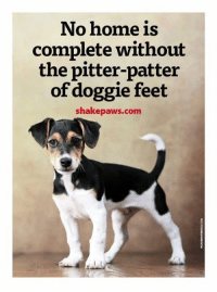 Doggying: No home is  complete without  the pitter-patter  of doggie feet  shakepaws.com