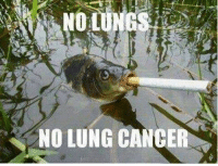 NO LUNG CANCER public service announcement to share your durrys with the friendly fish folk because they give no fucks about cancer
