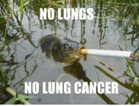 NO LUNG CANCER #swag  ~stalin