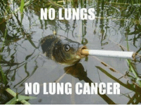 NO LUNG CANCER Why was this so funny.  On the other hand the main admin is actually learning how to balance his life so he can put content on his page. And is learning the art of talking in third person.