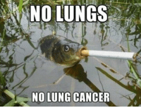 NO LUNGS  NO LUNG CANCER Smart Fish