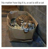 Anaconda, Funny, and Google: No matter how big it is, a cat is still a cat Will also ignore you 100% (Also, The Think Tank Podcast is out now on iTunes, Stitcher, and Google Play. Spotify coming soon. Very excited for you all to hear it. If you subscribe, DM me a screen shot and we can talk about what you think of it. iTunes link in bio).