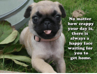 Truth: No matter  how crappy  your day is,  there is  always a  happy face  waiting for  you to  get home. Truth