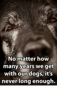Memes, Instinctive, and 🤖: No matter how  many years we get  with our dogs, it's  never long enough. A dog's life is never long enough <3 via K9 instinct