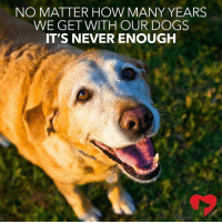 enough: NO MATTER HOW MANY YEARS  WE GET WITH OUR DOGS  IT'S NEVER ENOUGH