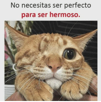 Cat gato animals catinstagram catsofinstagram catslover lovecats catgram catlife catlady catsworld gatito miau mew cabropeludos humor cabronazi 😺 😸 😽 😻: No necesitas ser perfecto  para ser hermosO. Cat gato animals catinstagram catsofinstagram catslover lovecats catgram catlife catlady catsworld gatito miau mew cabropeludos humor cabronazi 😺 😸 😽 😻