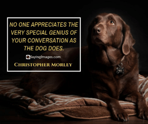 30 Pet Quotes on Love That Has No Boundaries #sayingimages #petquotes #quotes: NO ONE APPRECIATES THE  VERY SPECIAL GENIUS OF  YOUR CONVERSATION AS  THE DOG DOES.  Sayinglmages.com  CHRISTOPHER MORLEY  ALLIE 30 Pet Quotes on Love That Has No Boundaries #sayingimages #petquotes #quotes