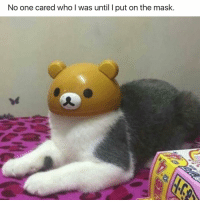😂😂😂 | More 👉 @miinute: No one cared who I was until I put on the mask. 😂😂😂 | More 👉 @miinute