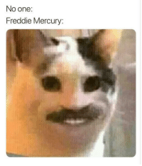 Mercury, Freddie Mercury, and One: No one:  Freddie Mercury: