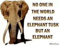 Worth a share: NO ONE IN  THE WORLD  NEEDS AN  A ELEPHANT TUSK  BUT AN  ELEPHANT  Wld at Heart Worth a share