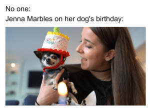 Birthday, Dogs, and Best: No one:  Jenna Marbles on her dog's birthday:  HAPlays This was the best thing I've seen today