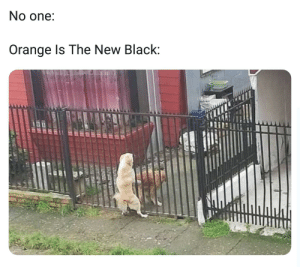 Nasty, Black, and Orange: No one:  Orange Is The New Black: These bitches are nasty