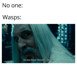 Are you challenging me ?: No one:  Wasps:  So you have chosen.. death. Are you challenging me ?