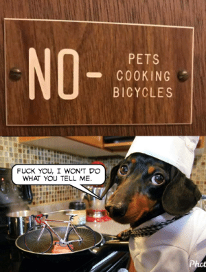 Fuck You, Pets, and Fuck: NO-  PETS  COOKING  BICYCLES  FUCK YOU, I WON'T DO  WHAT YOU TELL ME  chsid.  Cfebrit  Phot Don't do what they tell you.