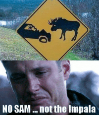 this is like one of these 2009 memes that are stupid as heck but everyone loves them😂❤: NO SAM ...not the Impala this is like one of these 2009 memes that are stupid as heck but everyone loves them😂❤