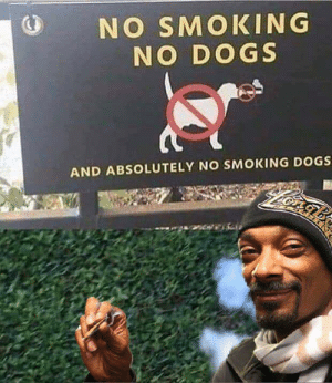 Can't stop the Dogg: NO SMOKING  NO DOGS  AND ABSOLUTELY NO SMOKING DOGS Can't stop the Dogg