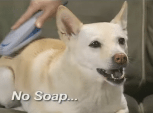 dogjpeg:   highhwayystarr:  Stinky   : No Soap dogjpeg:   highhwayystarr:  Stinky