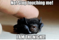 Memes, 🤖, and So Cute: No! Stop  me!  I AM THE NIGHT! You're so cute