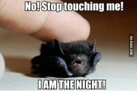 No! Stop touching me!  IAM THE NIGHT!