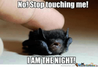 No! Stop touching me!  IAM THE NIGHT!  memecenter.com Did you know that baby bats rock themselves to sleep??