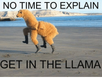 llama: NO TIME TO EXPLAIN  GET IN THE LLAMA