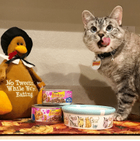 So many things to be thankful for this year…family, friends and a tasty feast! Can't wait to join in my family's Thanksgiving festivities and celebrate with my own @Friskies Prime Filets Turkey Dinner in Gravy. What's your holiday plan? sponsored: No Tweetr  While WeN  Eathng  Friskies  FILES  Friskies  friskies So many things to be thankful for this year…family, friends and a tasty feast! Can't wait to join in my family's Thanksgiving festivities and celebrate with my own @Friskies Prime Filets Turkey Dinner in Gravy. What's your holiday plan? sponsored