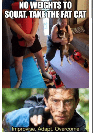 Training at home: NO WEIGHTS TO  SQUAT. TAKE THE FAT CAT  Improvise. Adapt. Overcome  mgflip.com Training at home