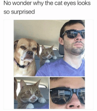 "Memes, 🤖, and Dog: No wonder why the cat eyes looks  so surprised That dog's face is like "" I never even liked my life... """