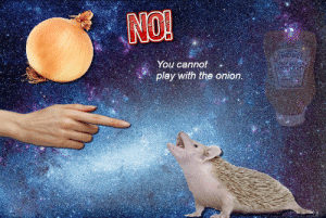 Memes, Reddit, and The Onion: NO!  You cannot  play with the onion.  8l surrealmemes:  [Src]