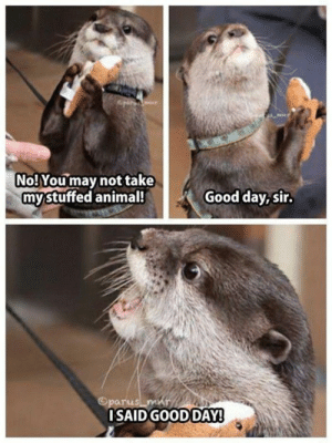 20 Funny Photos for Your Monday #funny #memes: No!Youmay not take  mystuffed animal!  Good day, sir.  Oparu  ISAID GOOD DAY! 20 Funny Photos for Your Monday #funny #memes