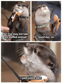 Memes, Reddit, and Saw: No! Youmay not take  mystuffed animal!  Good day, sir.  SAID GOOD DAY Just found a folder with some real old Memes i didnt saw for a long time on reddit, have fun!