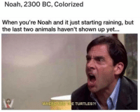 Animals, Memes, and Omg: Noah, 2300 BC, Colorized  When you're Noah and it just starting raining, but  the last two animals haven't shown up yet...  WHERE ARE THE TURTLES?! OMG
