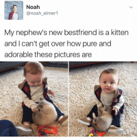 Memes, Noah, and 🤖: Noah  @noah elmer  My nephew's new bestfriend is a kitten  and I can't get over how pure and  adorable these pictures are 😂😂lol - - - - - - - - text post textpost textposts relatable comedy humour funny kyliejenner kardashians hiphop follow4follow f4f kanyewest like4like l4l tumblr tumblrtextpost imweak lmao justinbieber relateable lol hoeposts memesdaily oktweet funnymemes hiphop bieber trump