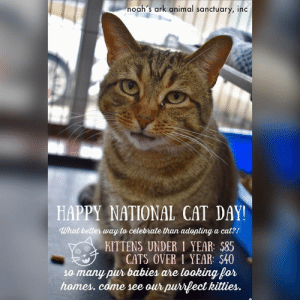 Happy #nationalcatday !! We have some many cats that are waiting for their purrrrfect forever home. Or can't adopt? Celebrate National Cat Day by coming down to the Ark to snuggle some kitties. Our cats can always use socialization and cuddles💕💕: noah's ark animal sanctuary, inc  HAPPY NATIONAL CAT DAY!  What better way to celebrate than adopting a cat?!  KITTENS UNDER 1 YEAR: $85  CATS OVER 1 YEAR: $40  10 many pur babies are looking for  homes. come see our purrfect kitties. Happy #nationalcatday !! We have some many cats that are waiting for their purrrrfect forever home. Or can't adopt? Celebrate National Cat Day by coming down to the Ark to snuggle some kitties. Our cats can always use socialization and cuddles💕💕
