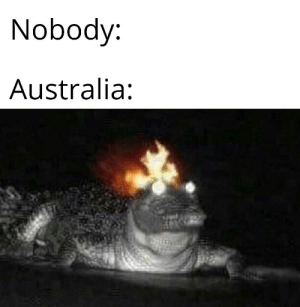 Dank, Memes, and Target: Nobody:  Australia: WHAT THE FUCC by JVIRRIA MORE MEMES