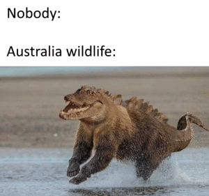 Australia, Bear, and Croc: Nobody:  Australia wildlife: Im scared of Croc-bear