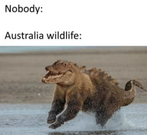 The croc-bear cant hurt you, it doesnt exists :: Nobody:  Australia wildlife: The croc-bear cant hurt you, it doesnt exists :