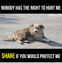 Memes, Wolf, and 🤖: NOBODY HAS THE RIGHT TO HURT ME  DAVID WOLFE COM  SHARE IF YOU WOULD PROTECT ME