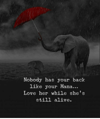 Alive, Love, and Back: Nobody has your back  like your Mama  Love her while she's  still alive.