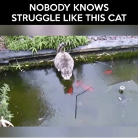 Nobody Know: NOBODY KNOWS  STRUGGLE LIKE THIS CAT