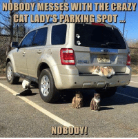 Cats, Memes, and 🤖: NOBODY MESSES WITH THE CRAZY  CAT LADYS PARKING SPOT