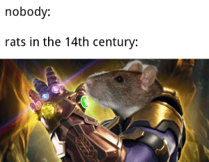Dang, Those, and Nobody: nobody:  rats in the 14th century: Those dang rats